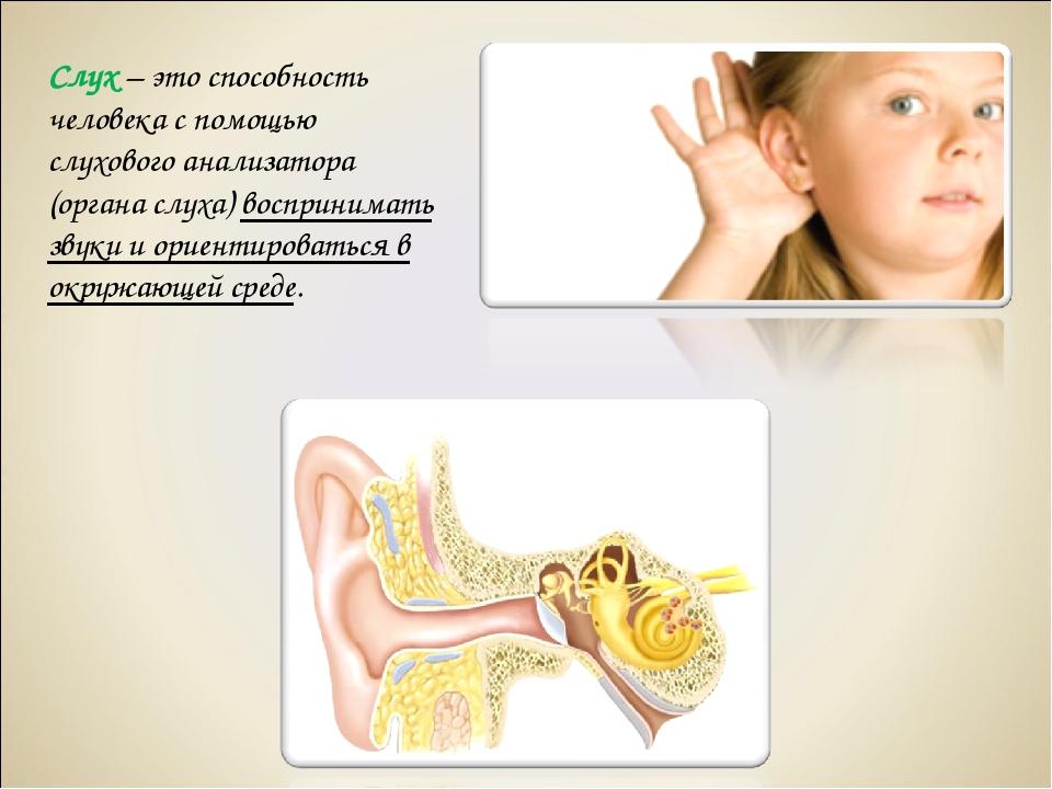 Слух – это способность человека с помощью слухового анализатора (органа слуха...