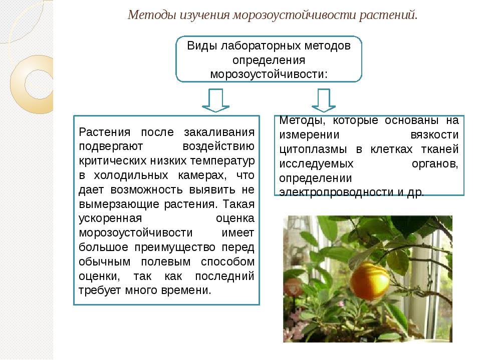 Методы изучения морозоустойчивости растений. Виды лабораторных методов опреде...