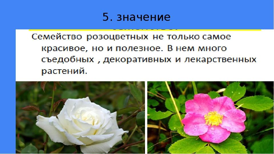 5. значение