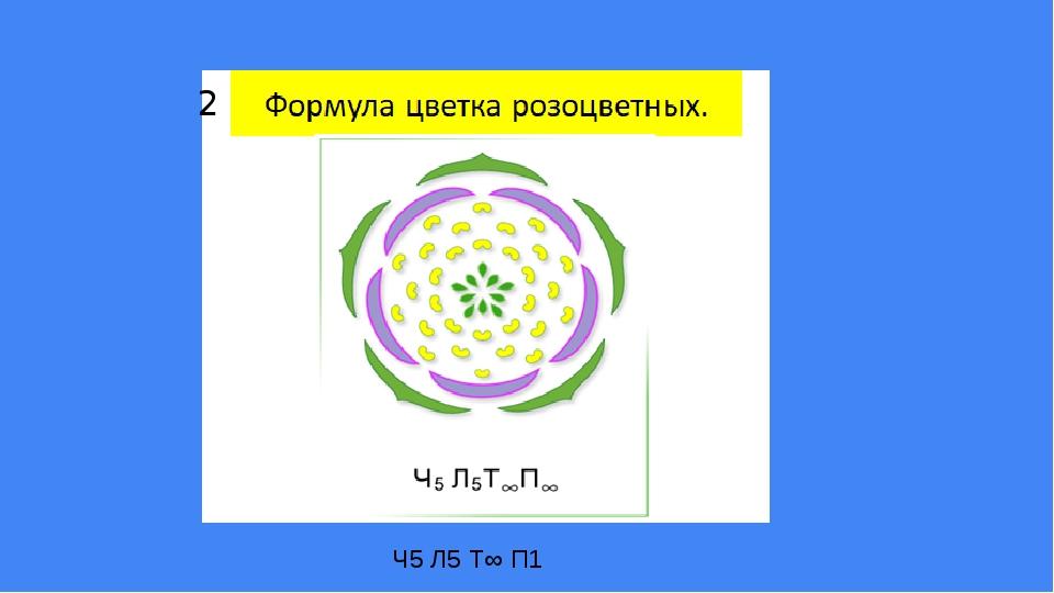 Ч5 Л5 Т∞ П1 2