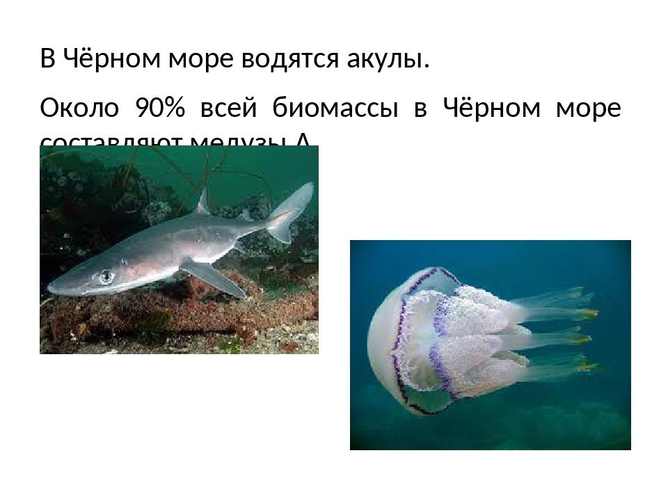 Черное Море Интернет Магазин