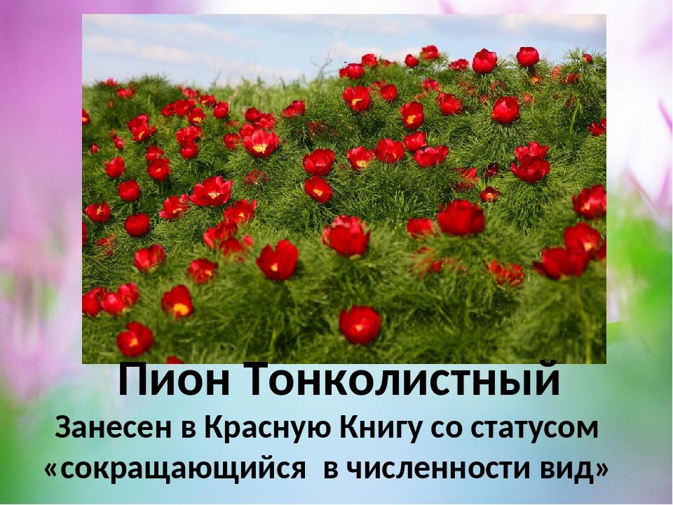 самых древних растения красной книги крыма фото и описание бесплатно широкоформатные картинки