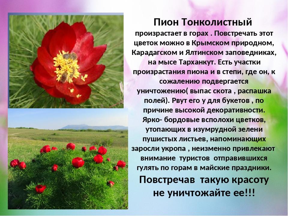 растения красной книги крыма фото и описание продукт, выпускаемый корпорацией