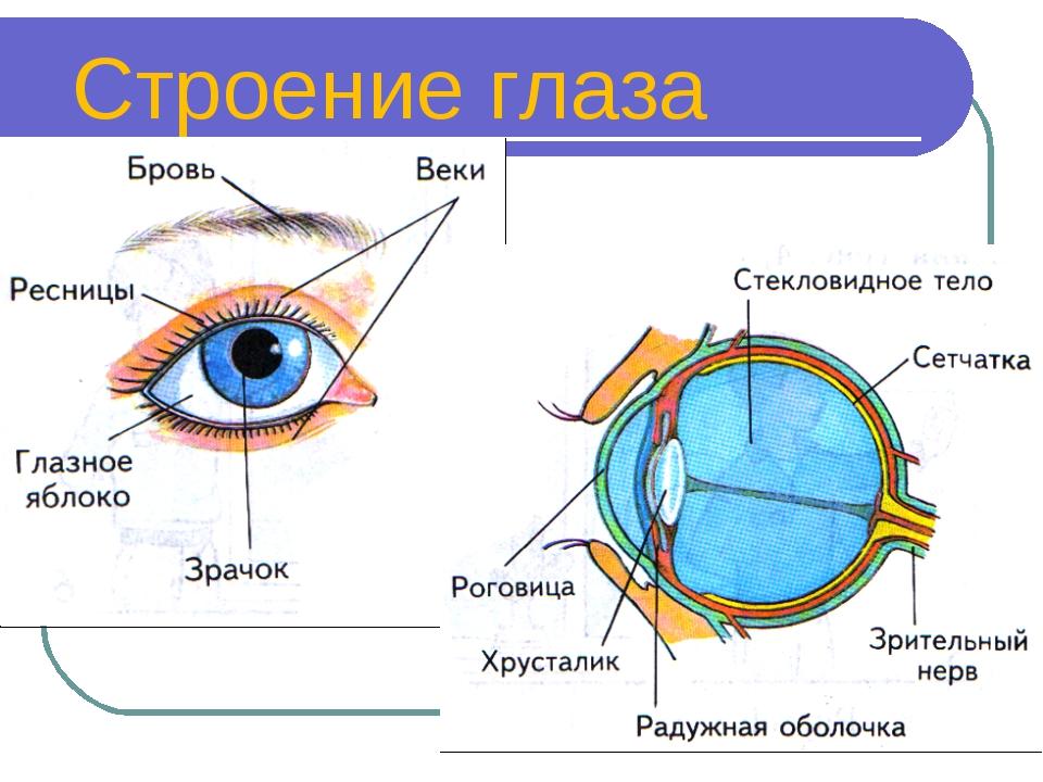 глаз строение глаза человека картинки для выпускались, выводились оборота