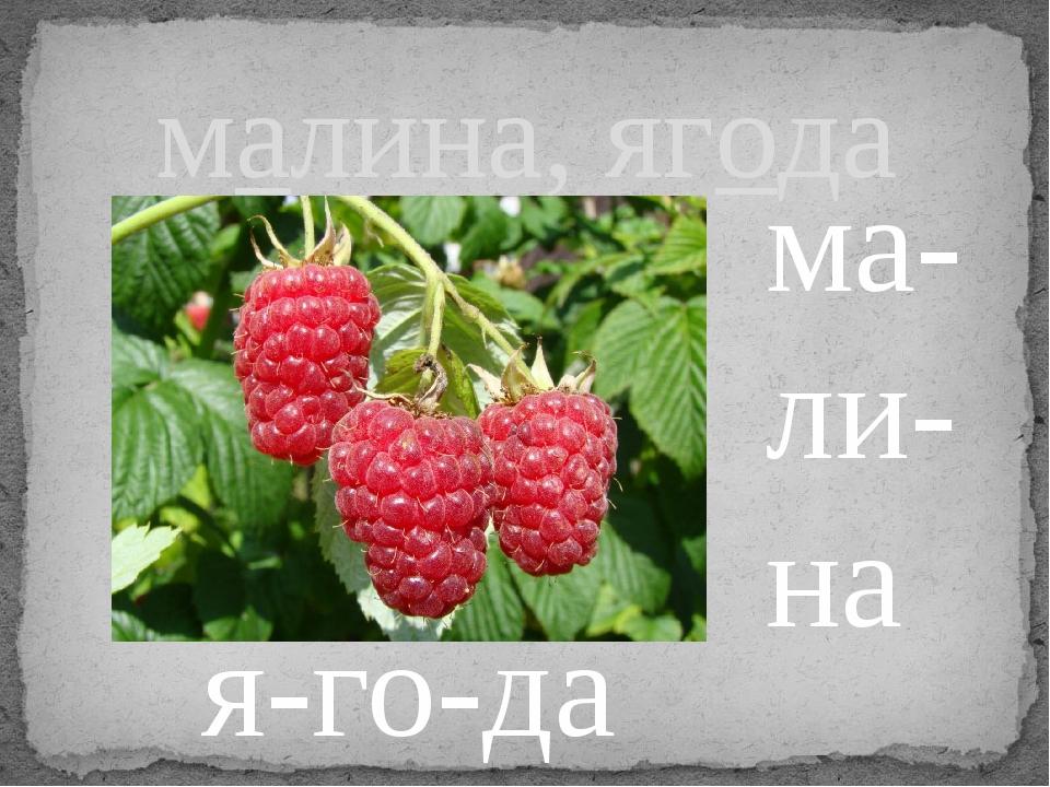малина, ягода ма- ли- на я-го-да