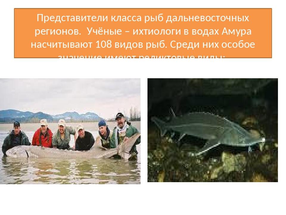Представители класса рыб дальневосточных регионов. Учёные – ихтиологи в водах...