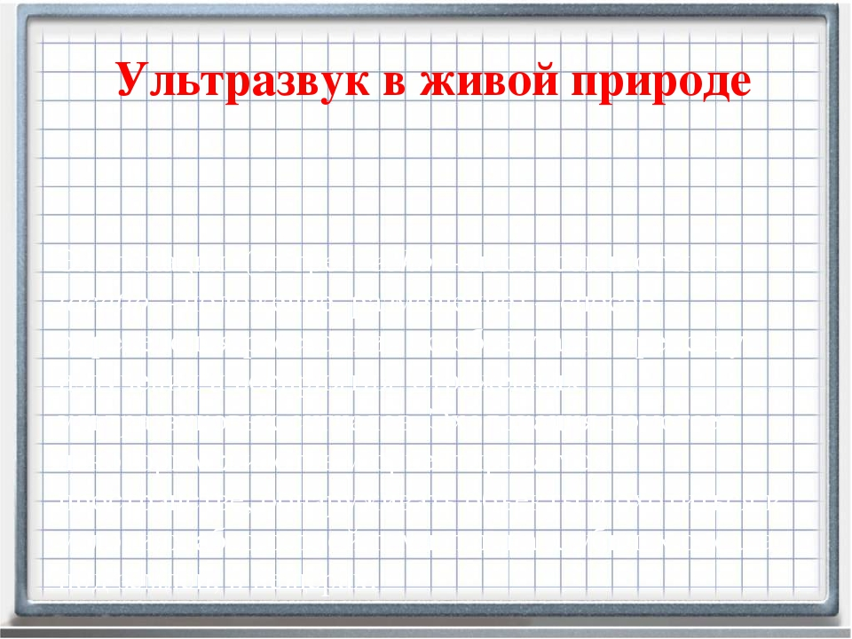 Ультразвук в живой природе Эхолокация (от греч. еcho –отголосок и от лат. loc...
