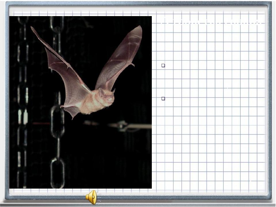 различно у разных видов летучих мышей: остроухая ночница излучает ультразвуко...