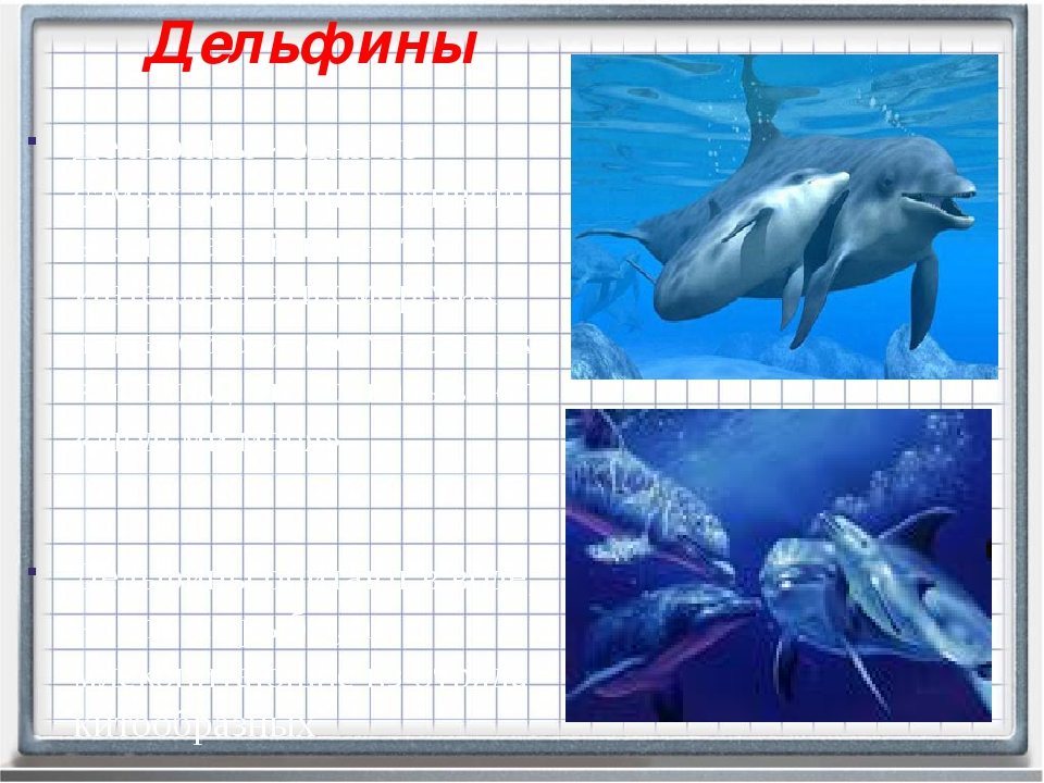 Дельфины Дельфины - одни из самыхзагадочныхживотных на нашей планете. Интел...