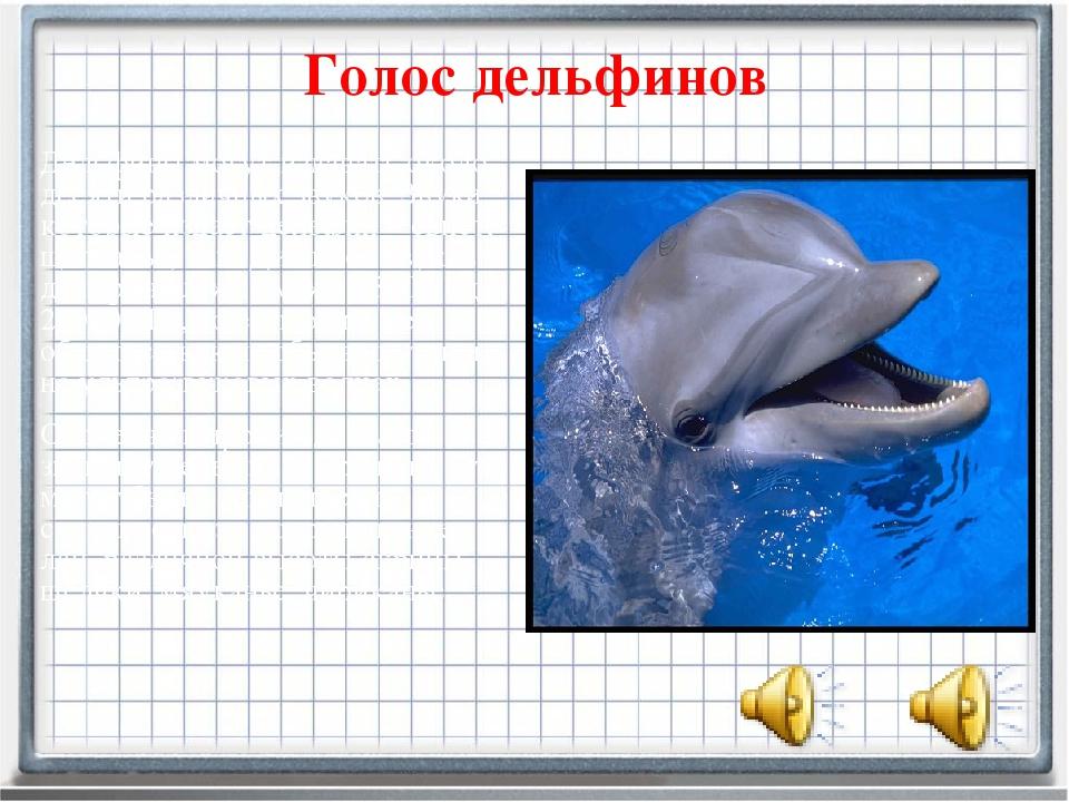 Голос дельфинов Дельфинымогут издавать около десяти различных звуков. Звуки,...
