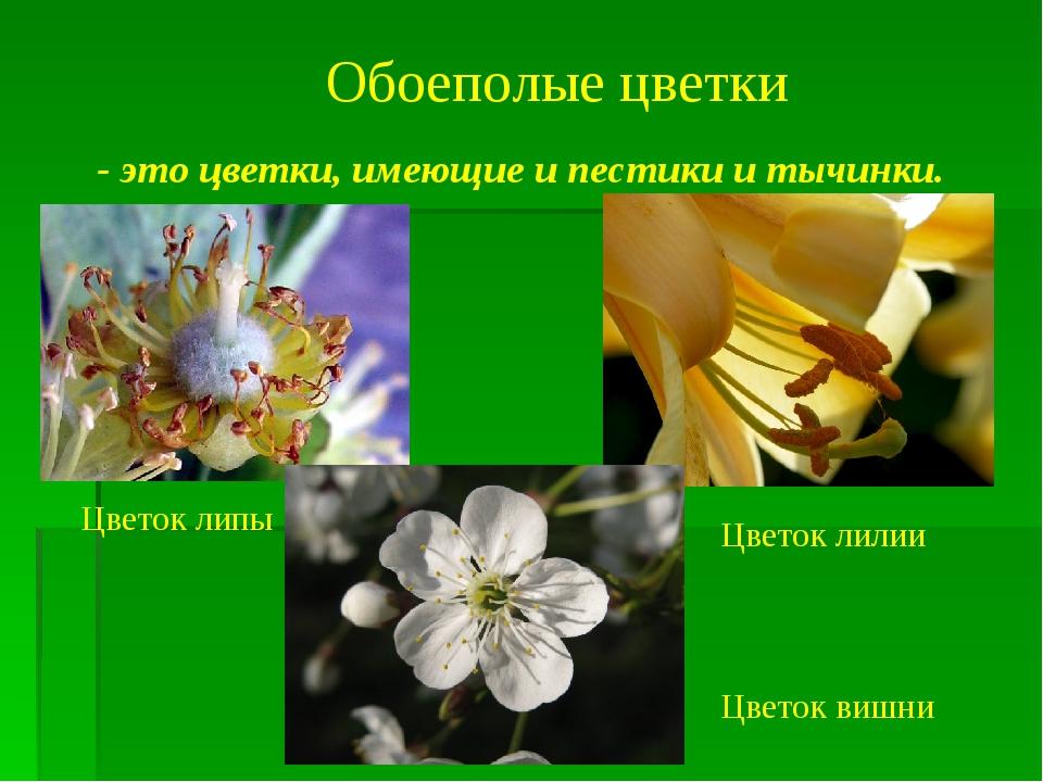 Картинки однолетние цветковые растения нужно