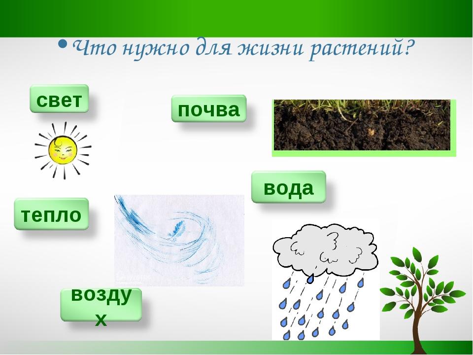 Картинки что нужно для жизни растений