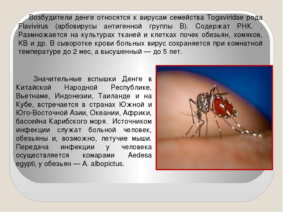 Возбудители денге относятся к вирусам семейства Togaviridae рода Flavivirus...