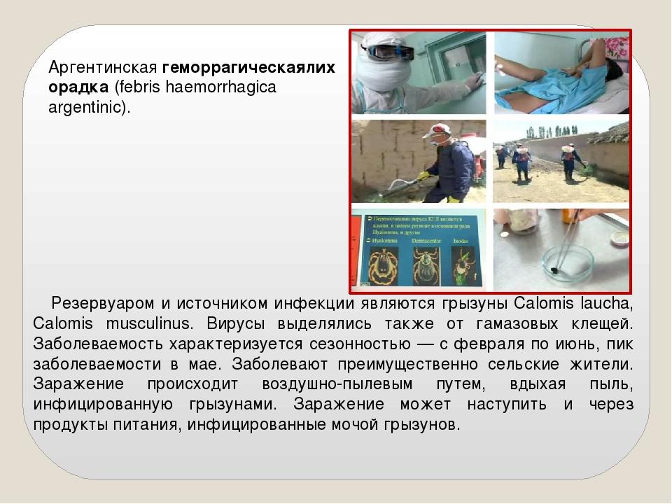 Резервуаром и источником инфекции являются грызуны Calomis laucha, Calomis m...