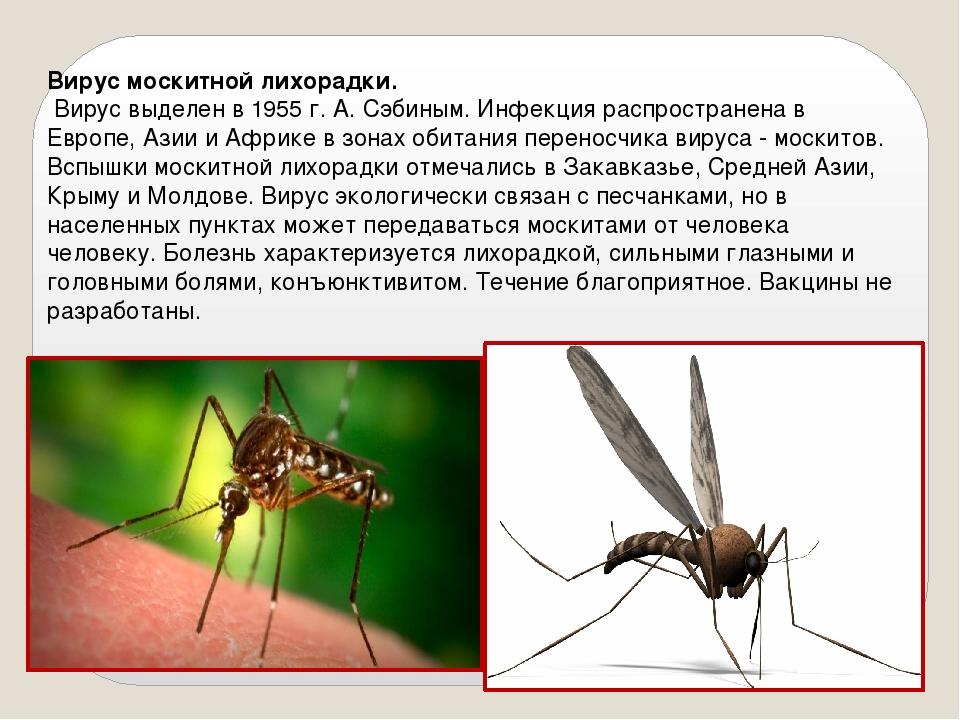 Вирус москитной лихорадки. Вирус выделен в 1955 г. А. Сэбиным. Инфекция распр...
