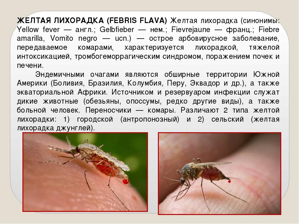 ЖЕЛТАЯ ЛИХОРАДКА (FEBRIS FLAVA) Желтая лихорадка (синонимы: Yellow fever — ан...