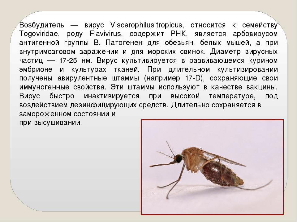Возбудитель — вирус Viscerophilustropicus, относится к семейству Togoviridae...