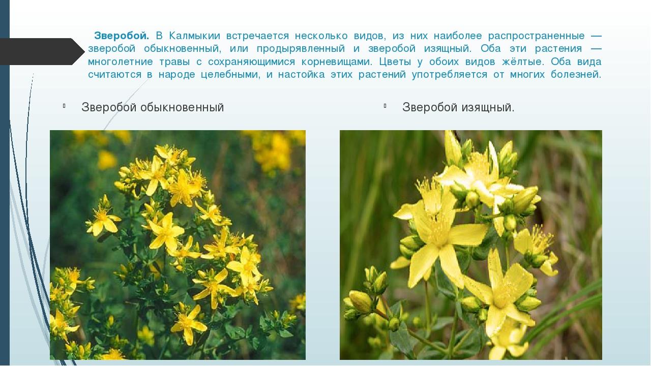 Картинки растений с названиями калмыкии