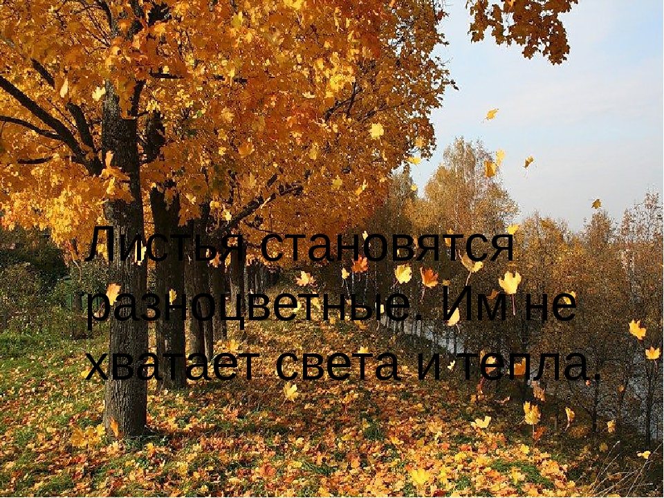 Листья становятся разноцветные. Им не хватает света и тепла.
