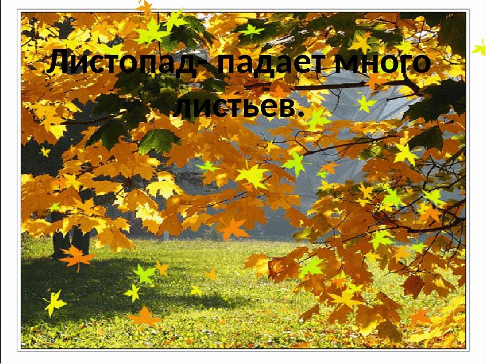Листопад- падает много листьев.
