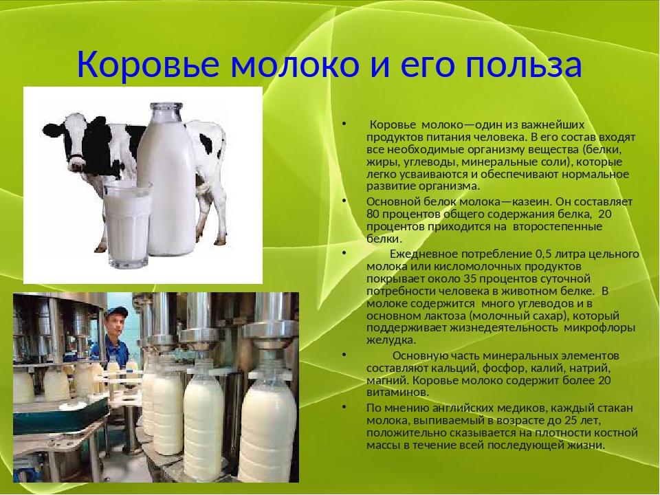 Коровье молоко и его польза Коровье молоко—один из важнейших продуктов питани...