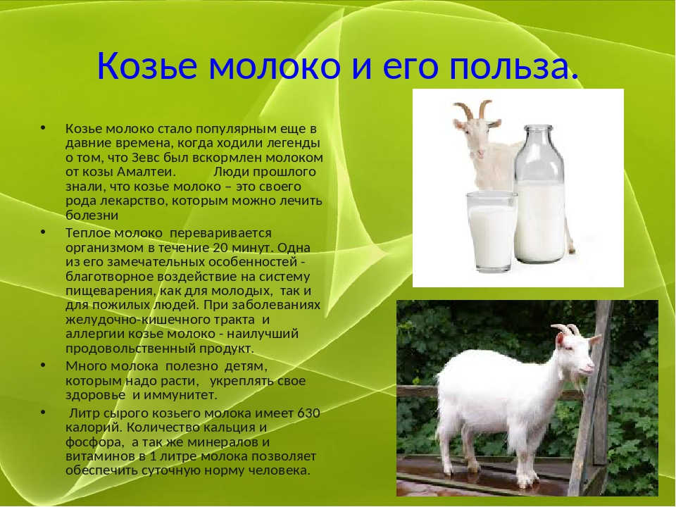 Козье молоко и его польза. Козье молоко стало популярным еще в давние времена...