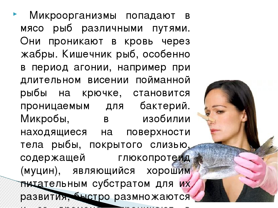 Микроорганизмы попадают в мясо рыб различными путями. Они проникают в кровь...