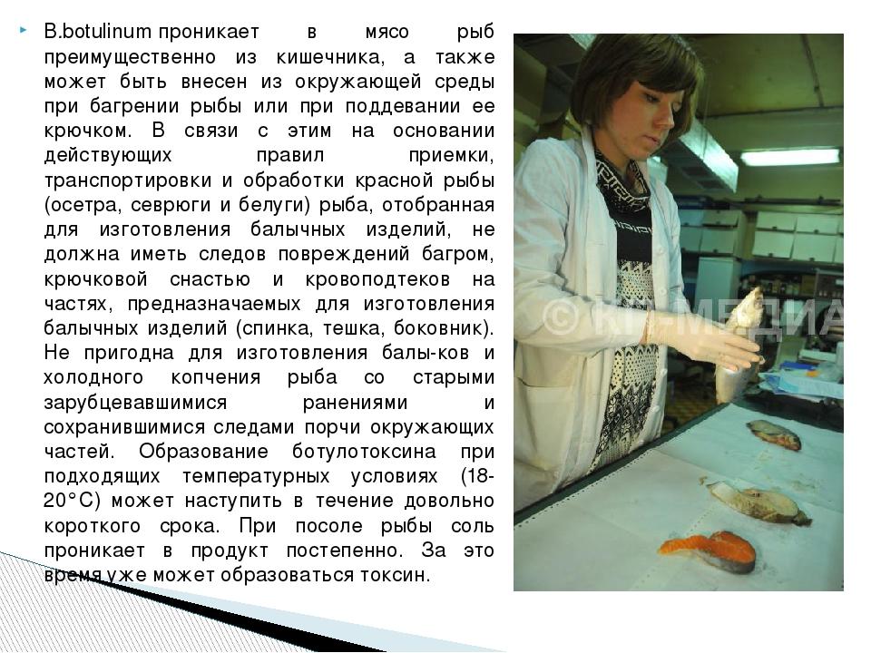 B.botulinumпроникает в мясо рыб преимущественно из кишечника, а также может...