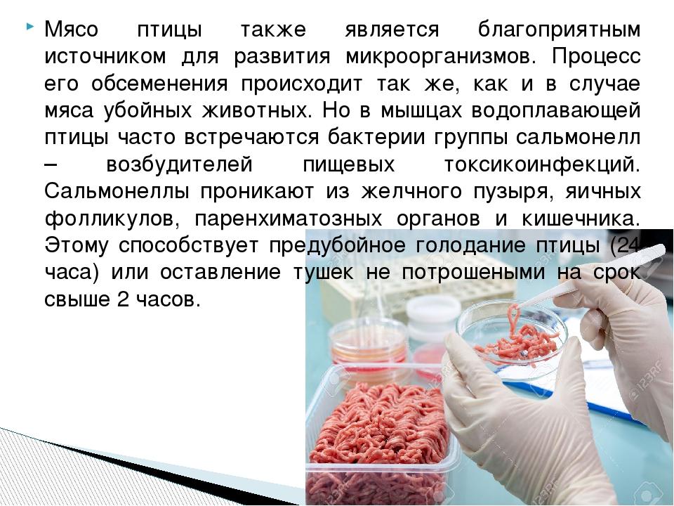 Мясо птицы также является благоприятным источником для развития микроорганизм...