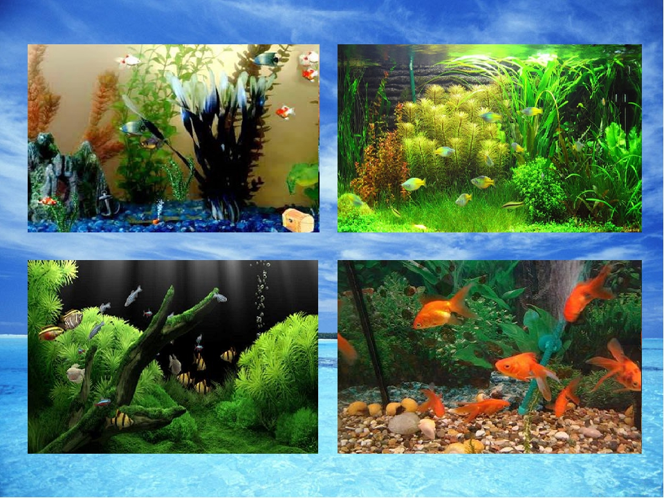 аквариум как экосистема картинки