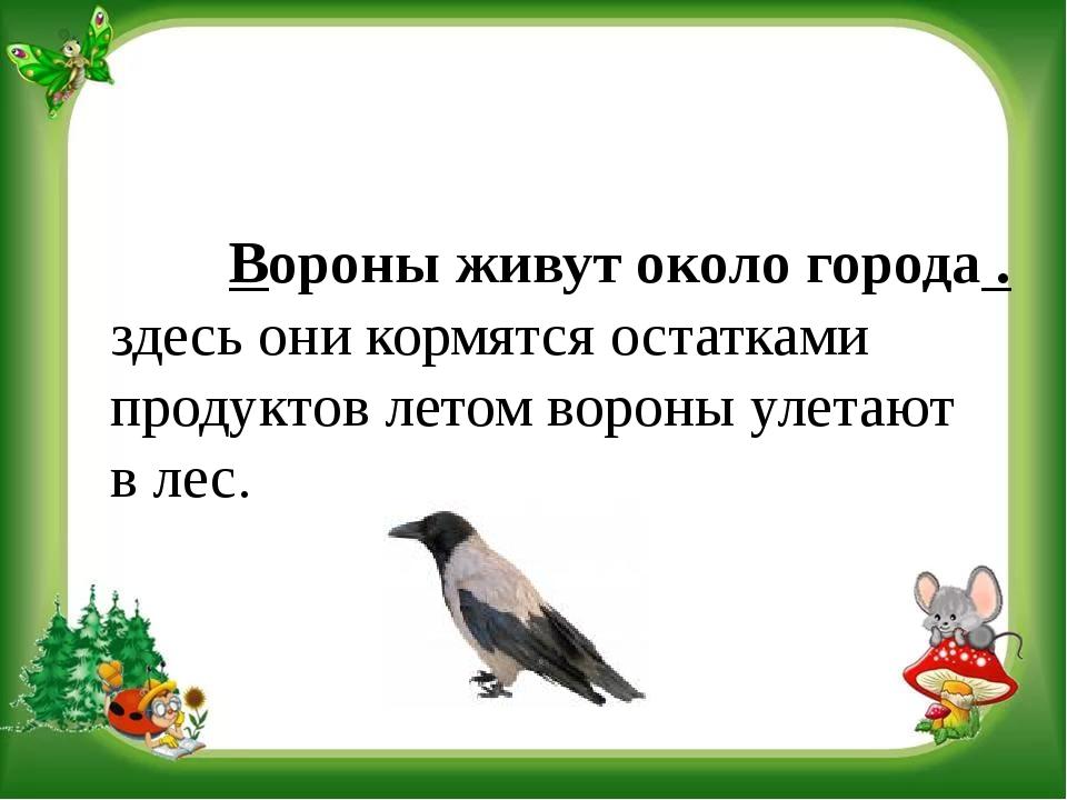 Вороны живут около города . здесь они кормятся остатками продуктов летом вор...