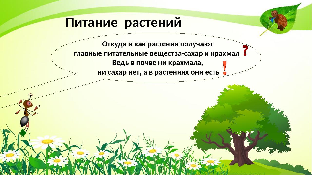 Синягина Т.В. Питание растений Откуда и как растения получают главные питате...