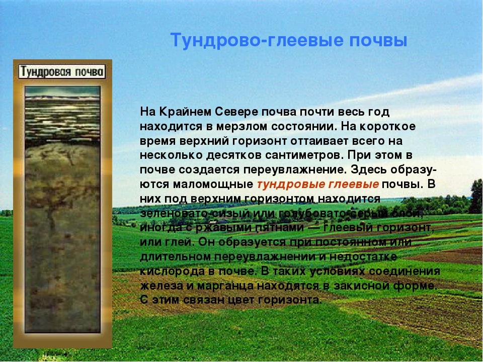 Тундрово-глеевые почвы На Крайнем Севере почва почти весь год находится в мер...