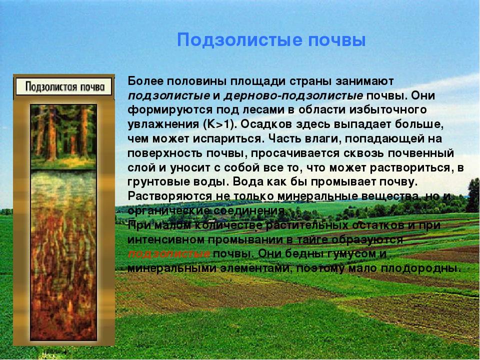 Подзолистые почвы Более половины площади страны занимают подзолистые и дернов...