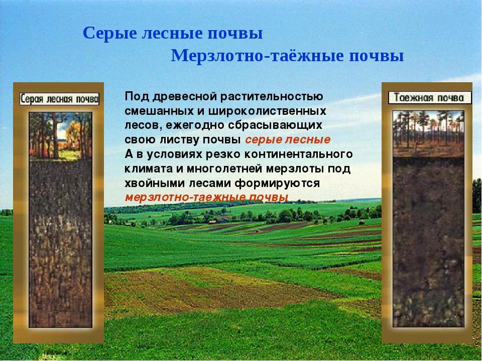 Серые лесные почвы Мерзлотно-таёжные почвы Под древесной растительностью смеш...