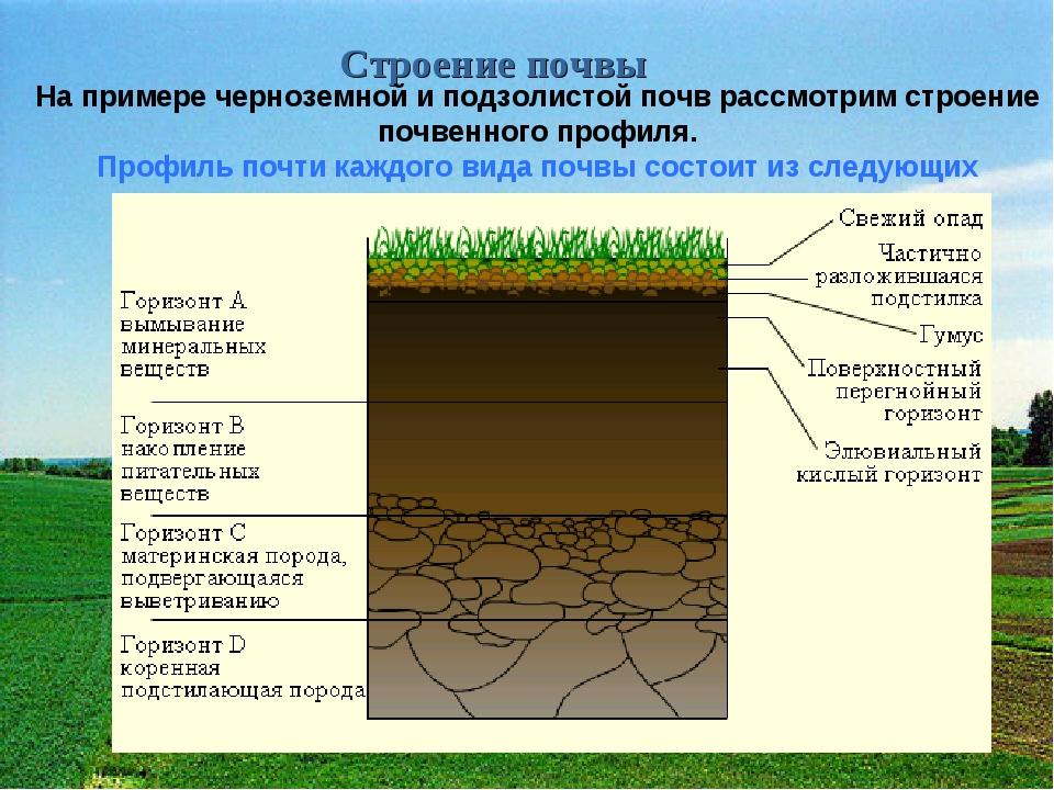 Строение почвы На примере черноземной и подзолистой почв рассмотрим строение...
