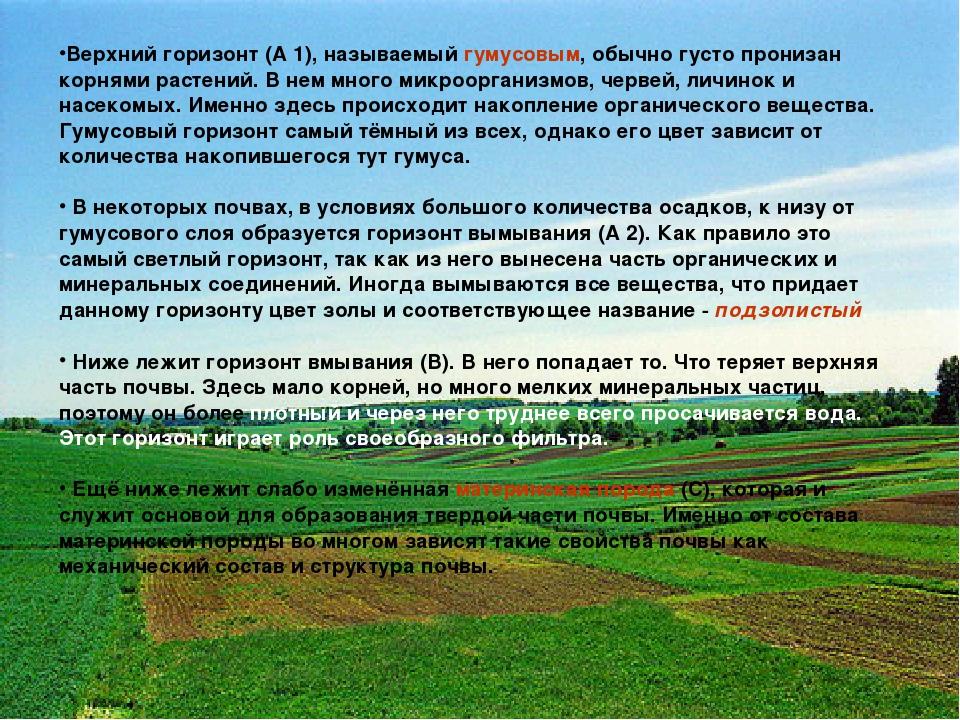 Верхний горизонт (А 1), называемый гумусовым, обычно густо пронизан корнями р...