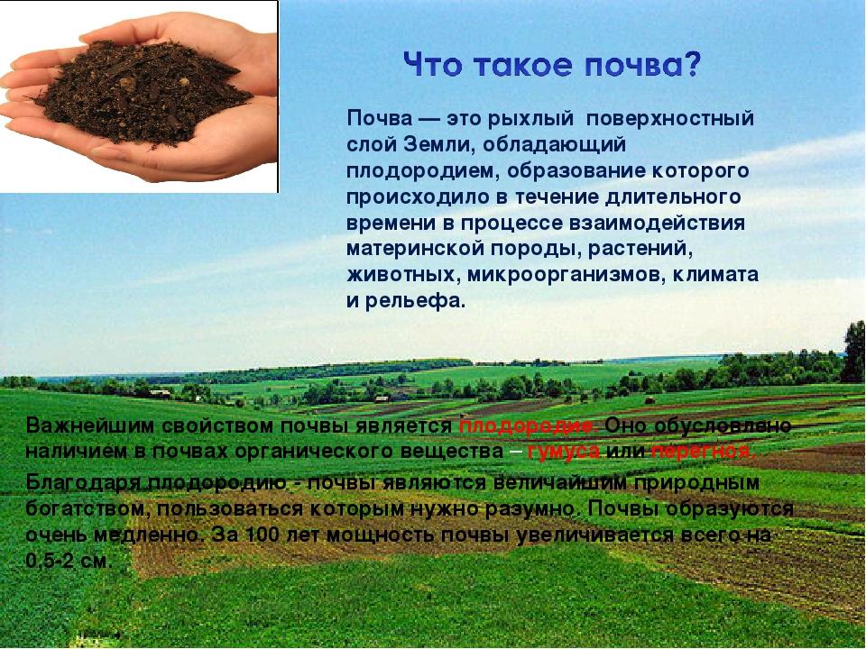Почва — это рыхлый поверхностный слой Земли, обладающий плодородием, образова...