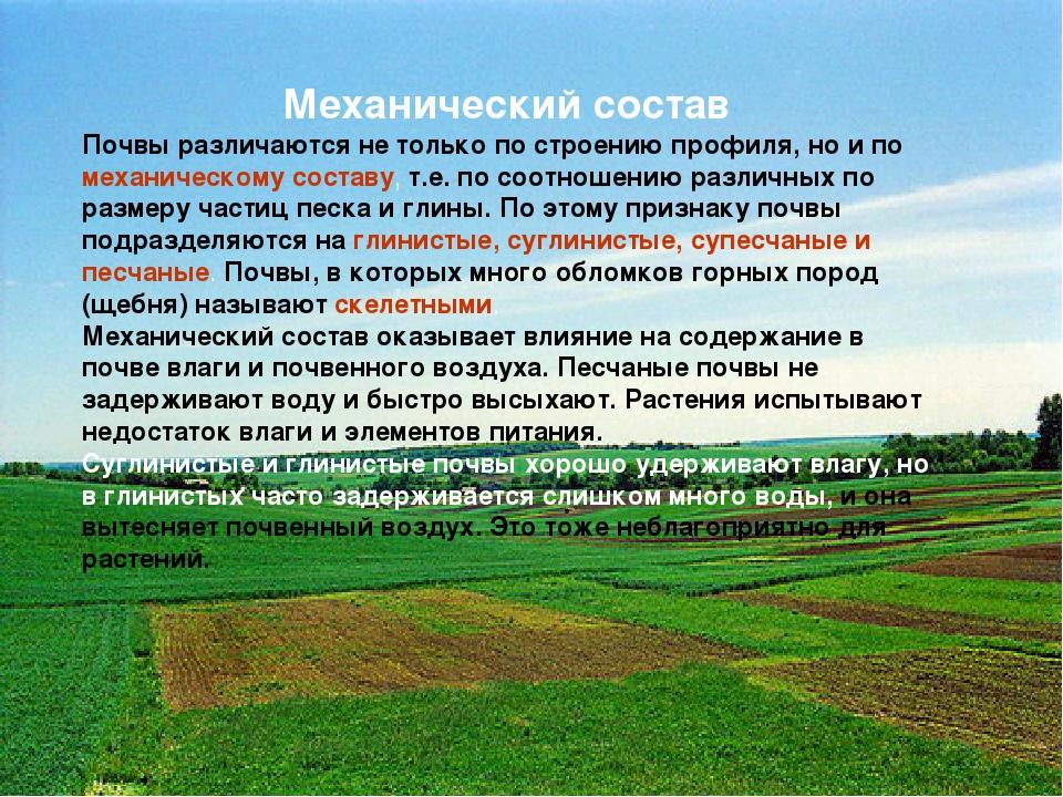 Механический состав Почвы различаются не только по строению профиля, но и по...