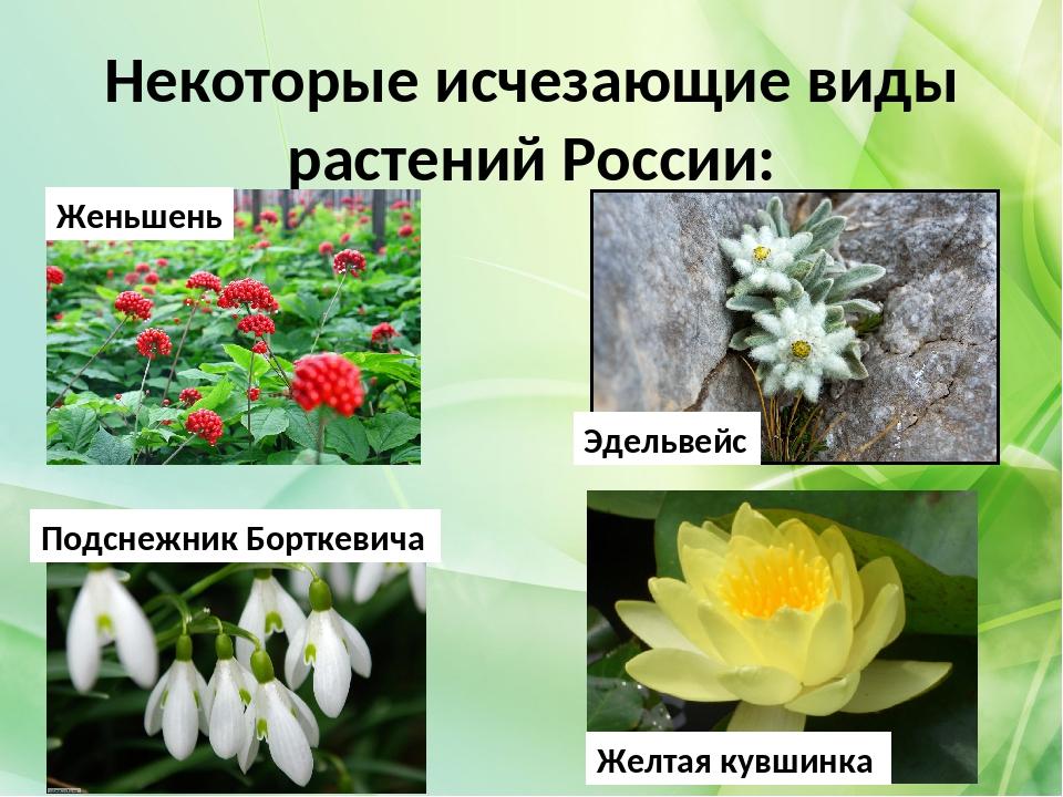 исчезнувшие растения россии занесенные в красную книгу