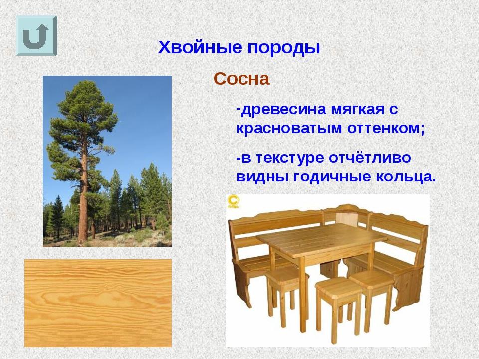 Хвойные породы Сосна древесина мягкая с красноватым оттенком; -в текстуре отч...