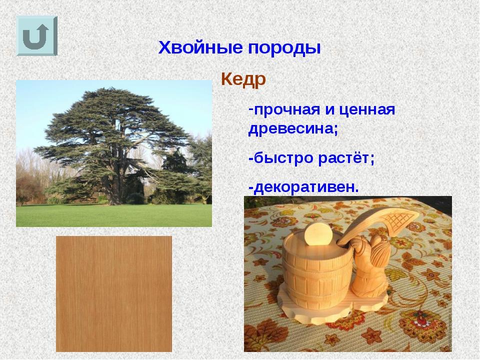 Хвойные породы Кедр прочная и ценная древесина; -быстро растёт; -декоративен.