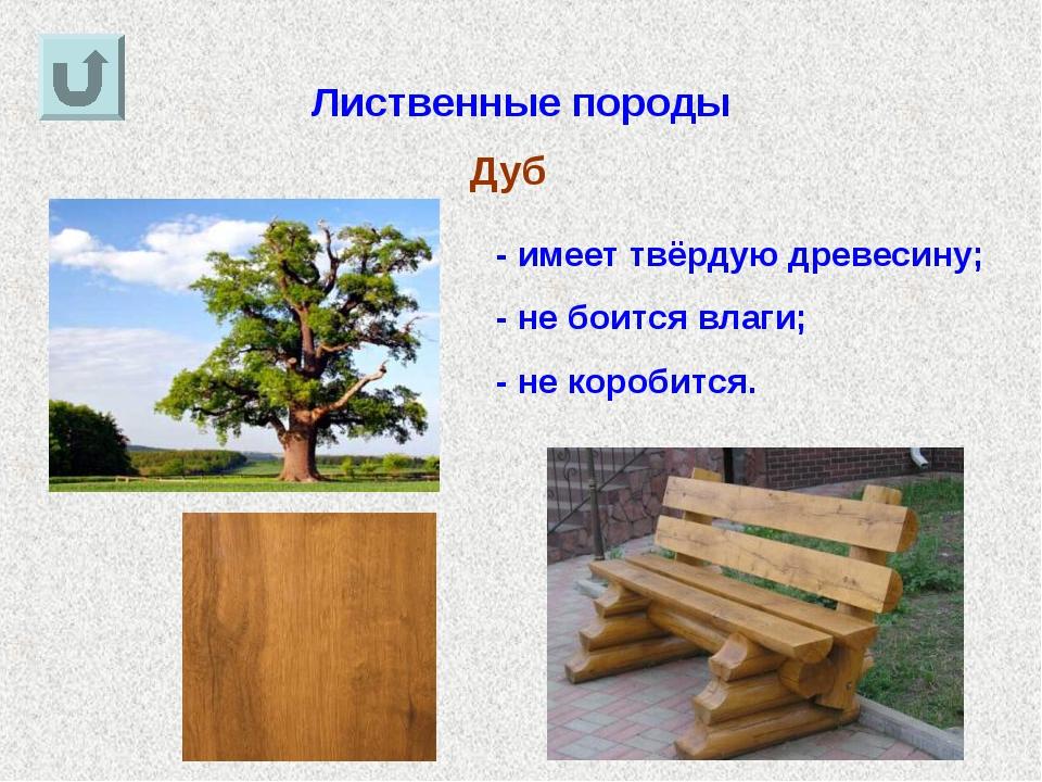Лиственные породы Дуб - имеет твёрдую древесину; - не боится влаги; - не коро...