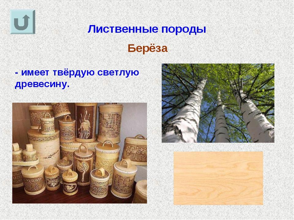 Лиственные породы Берёза - имеет твёрдую светлую древесину.