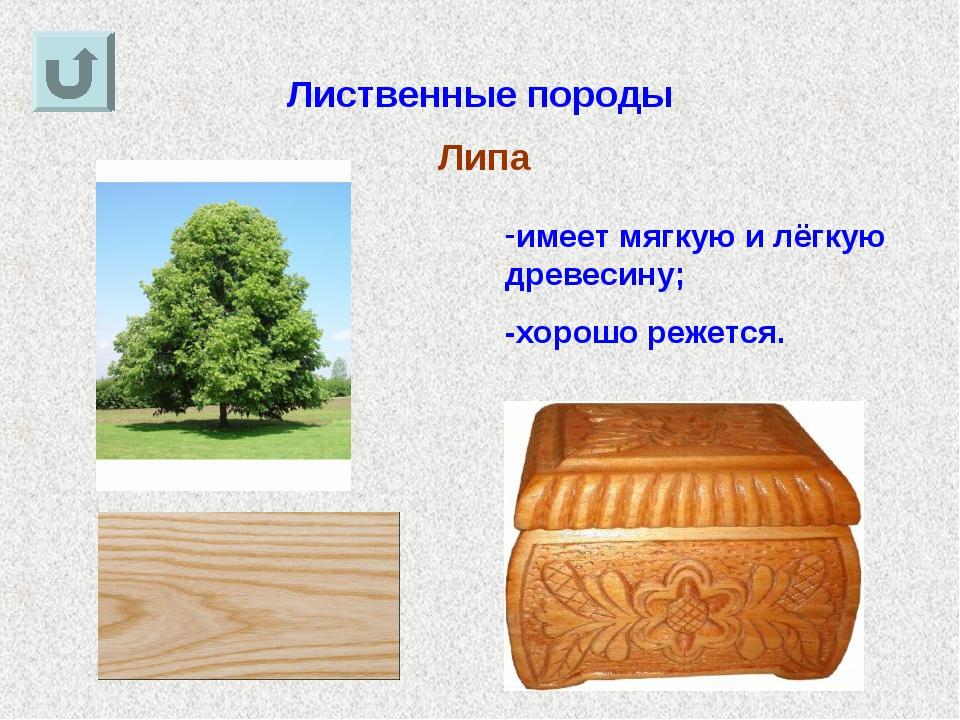 Лиственные породы Липа имеет мягкую и лёгкую древесину; -хорошо режется.