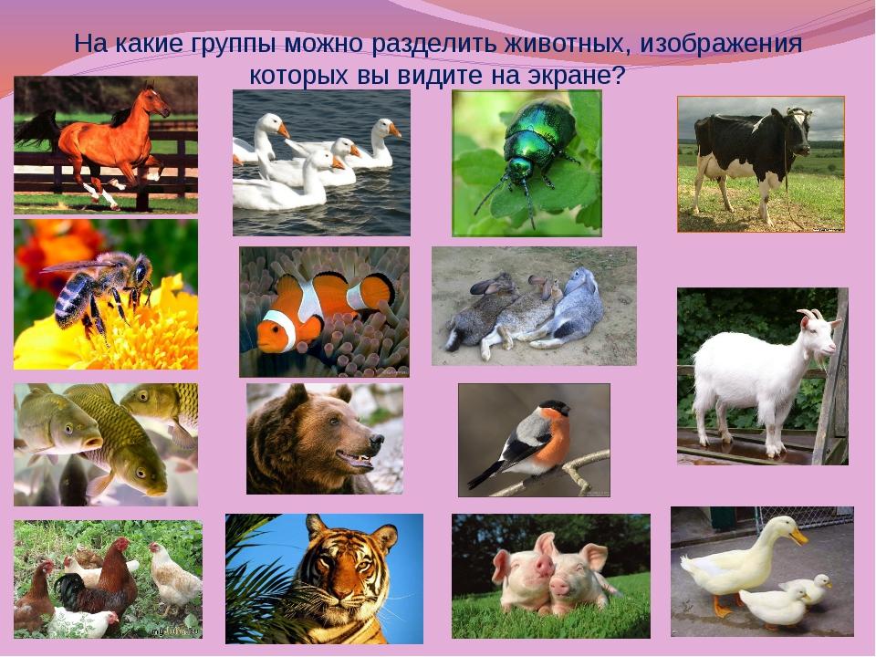 название групп животных с картинками апельсины лимоны