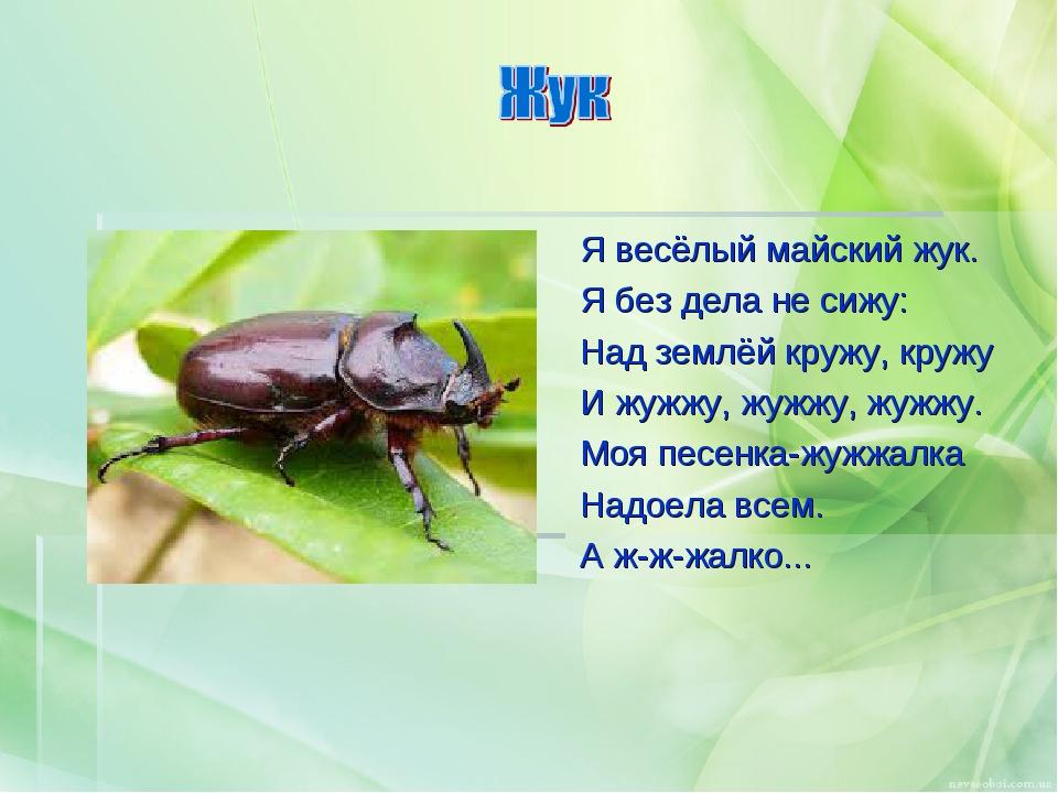 Я весёлый майский жук. Я без дела не сижу: Над землёй кружу, кружу И жужжу, ж...