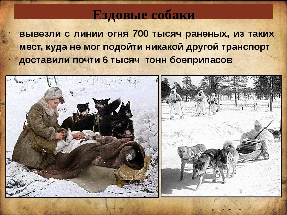 Ездовые собаки вывезли с линии огня 700 тысяч раненых, из таких мест, куда не...