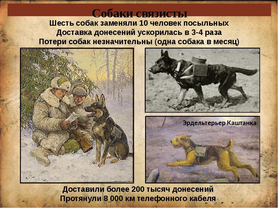 Собаки связисты Шесть собак заменяли 10 человек посыльных Доставка донесений...