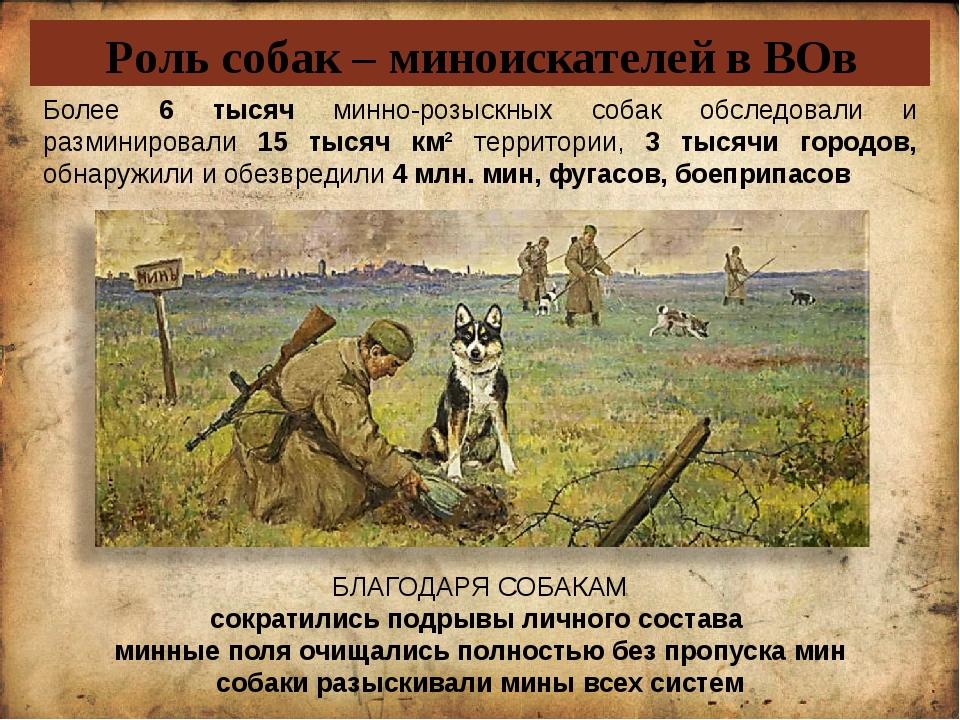 Роль собак – миноискателей в ВОв Более 6 тысяч минно-розыскных собак обследов...
